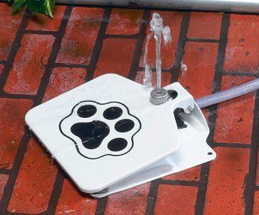 Doggie Fountains