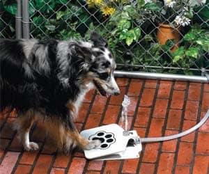 Doggie Water Fountain