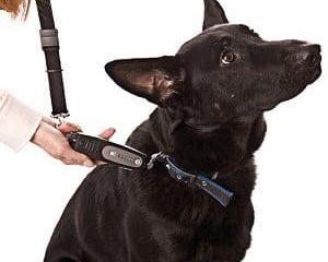 tug preventing dog trainer