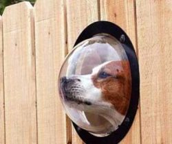 Dog Peek Window