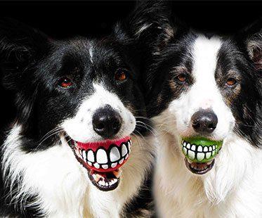SMILING-DOG-BALL