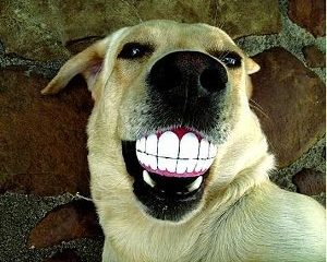 Smiling Dog Ball