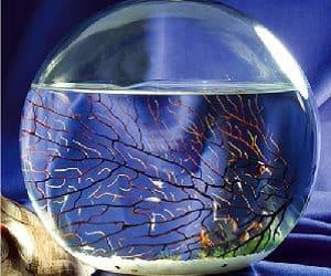 ecosystem sphere