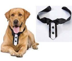 tuxedo dog collar