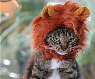 Lion mane wig solutioingenieria Image collections