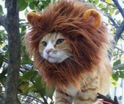 lion mane wig