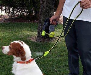 misting dog leash