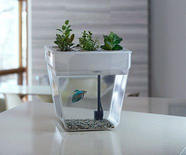 SELF-CLEANING-FISH-TANKS