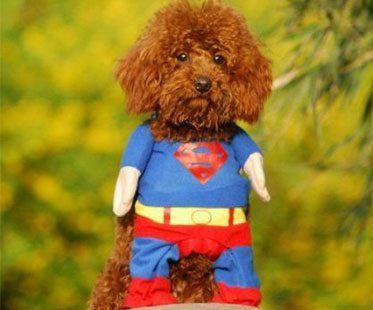 SUPERMAN-PET-COSTUME