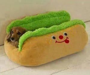 Ένα διαφορετικό κρεβάτι...