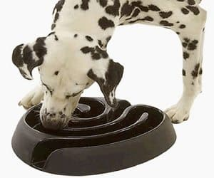 maze dog bowl