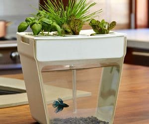 self cleaning fish tank