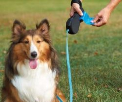 dog leash with bag holder