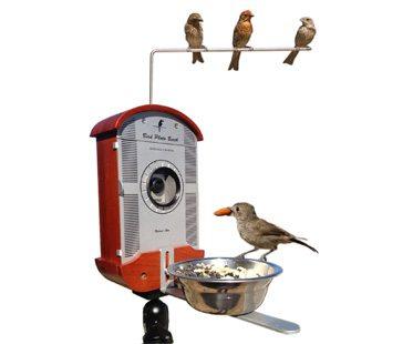 BIRD-PHOTO-BOOTH