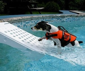 pet water ramp