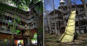 World Biggest treehouses
