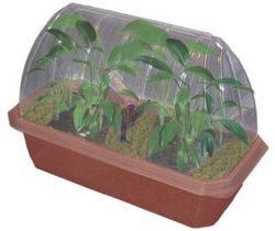 banana plant growing kit