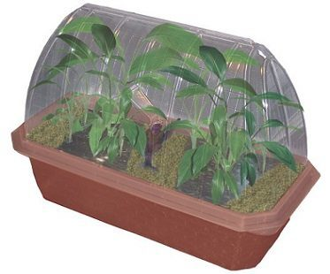 banana plant growing kit