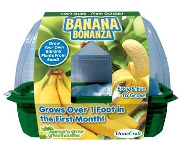 banana plant growing kit box