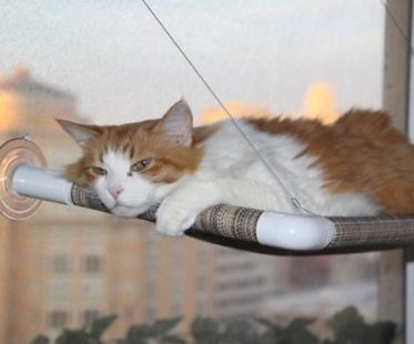 cat window perch chilling