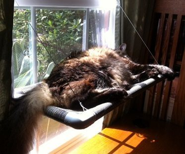 cat window perch lazing