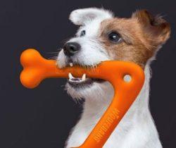 dog boomerang toy