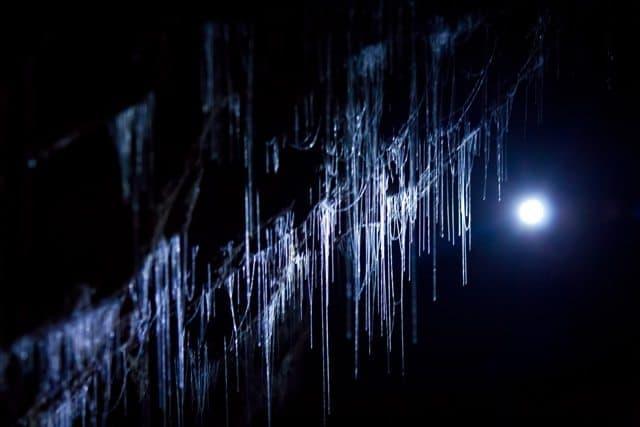 glowworm cave close up