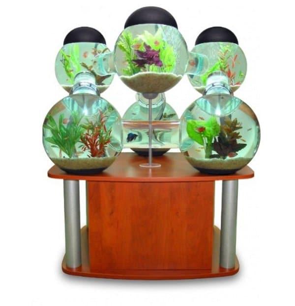 Weird and wonderful aquariums for Poisson eau froide aquarium