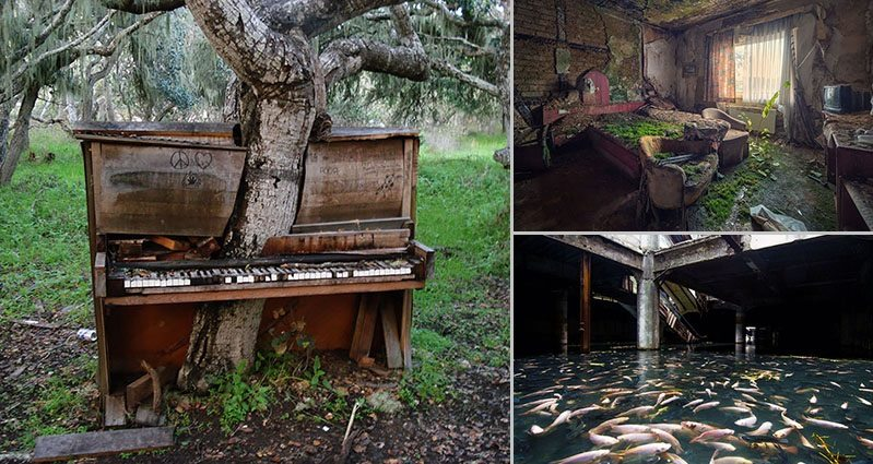 15 Pictures of nature taking over civilization
