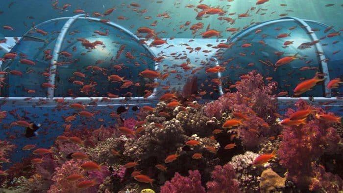 pod fish