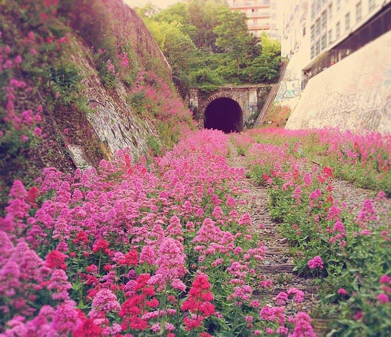 railway-paris-flowers