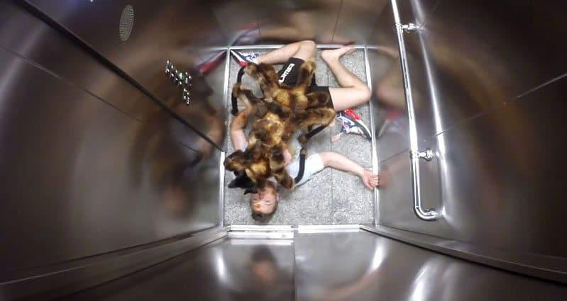 spider-dog-costume