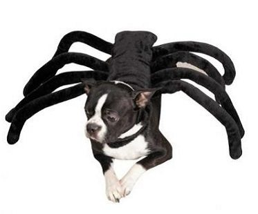 sc 1 st  Awesome Inventions & Spider Dog Costume