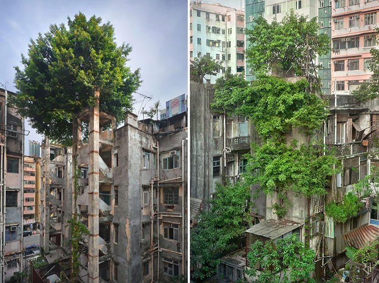 tree-hong-kong