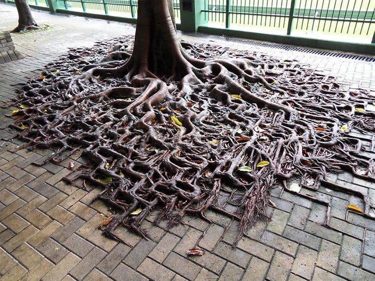 tree-roots-sidewalk