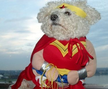 wonder woman pet costume fluffy