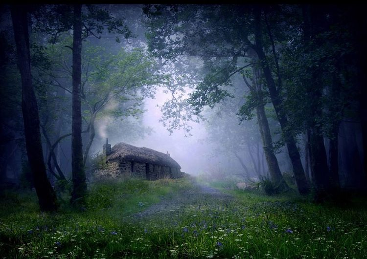 Cottage In The Woods, Scotland