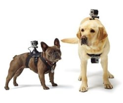 Dog Harness Camera Mount