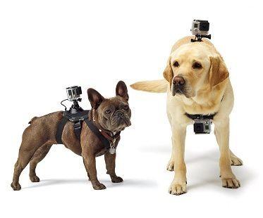 Dog Harness Camera Mount