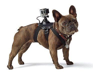 Dog Harness Camera Mount dog