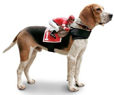 Jockey Rider Pet Costume dog