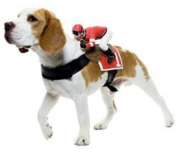 Jockey Rider Pet Costume side