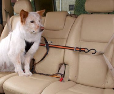 Pet Safety Harness car
