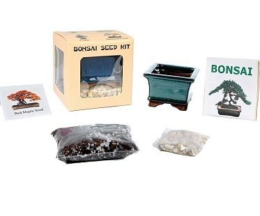 Red Maple Bonsai Kit contents