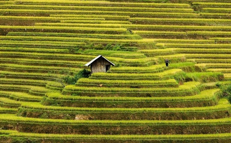Rice Terraces Of Mu Cang Chai, Vietnam
