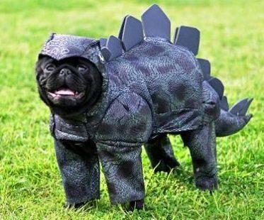 Stegosaurus Dog Costume funny