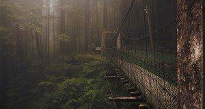 amazing bridges