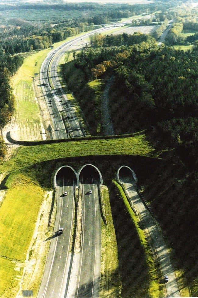 animal crossing bridge