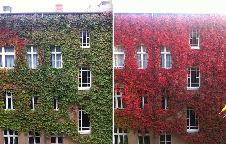 autumn-7