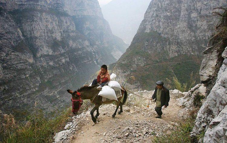 bijie china donkey